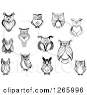 Clipart Of Black And White Owls Royalty Free Vector Illustration
