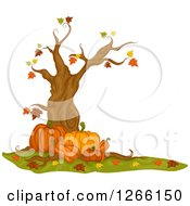 Clipart Of A Nearly Bare Autumn Maple Tree With Pumpkins Royalty Free Vector Illustration
