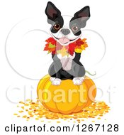 Cute Boston Terrier Dog Sitting On A Thanksgiving Or Halloween Pumpkin With Autumn Leaves