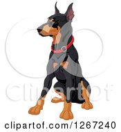 Clipart Of A Sitting Alert Doberman Pinscher Dog With A Red Collar Royalty Free Vector Illustration