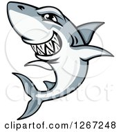 Clipart Of A Vicious Grinning Gray And White Shark Royalty Free Vector Illustration