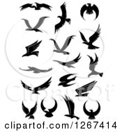 Clipart Of A Black And White Flying Eagles 3 Royalty Free Vector Illustration