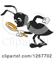 Black Ant Bending Over And Looking Through A Magnifying Glass