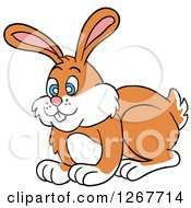 Happy Blue Eyed White And Orange Bunny Rabbit
