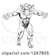 Clipart Of A Black And White Muscular Aggressive Boar Man Mascot Attacking Royalty Free Vector Illustration