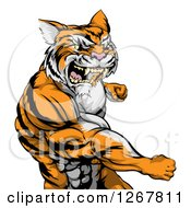 Clipart Of A Vicious Mad Muscular Tiger Man Punching Royalty Free Vector Illustration