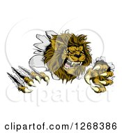 Clipart Of A Roaring Lion Mascot Shredding Through A Wall Royalty Free Vector Illustration