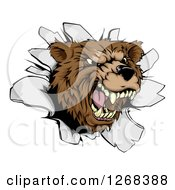 Clipart Of A Vicious Aggressive Roaring Bear Mascot Breaking Through A Wall Royalty Free Vector Illustration