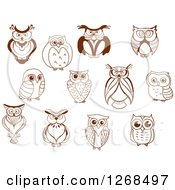 Clipart Of Sketched Brown Owls Royalty Free Vector Illustration