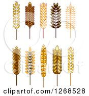 Clipart Of Wheat Stalks Royalty Free Vector Illustration