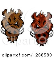 Clipart Of Vicious Razorback Boar Mascot Heads Royalty Free Vector Illustration