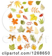 Clipart Of Random Autumn Leaves And Branches Royalty Free Vector Illustration