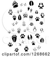 Clipart Of Black And White Animal Prints Royalty Free Vector Illustration by Vector Tradition SM