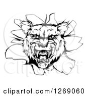 Clipart Of A Black And White Wolf Head Breaking Through A Wall Royalty Free Vector Illustration