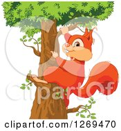 Cute Red Squirrel Looking Back And Climbing Up A Tree