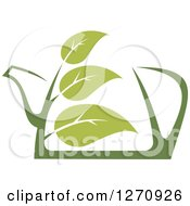 Two Toned Steamy Green Tea Pot And Leaves 2