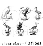 Clipart Of Black And White Wading Tribal Cranes Royalty Free Vector Illustration