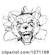 Clipart Of A Black And White Vicious Wolf Head Breaking Through A Wall Royalty Free Vector Illustration by AtStockIllustration