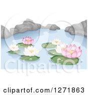 Pink And White Lotus Water Lilies And Rocks On A Pond