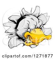 Clipart Of An Aggressive Duck Mascot Breaking Through A Wall Royalty Free Vector Illustration