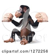 Clipart Of A 3d Thinking Chimpanzee Sitting Facing Left And Holding Two Brains Royalty Free Illustration
