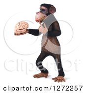 Clipart Of A 3d Thinking Chimpanzee Standing Facing Left And Holding A Brain Royalty Free Illustration