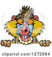 Clipart Of A Happy Baboon Peeking Over A Sign Royalty Free Vector Illustration