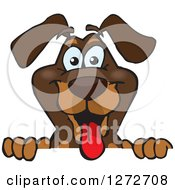 Clipart Of A Happy Dachshund Dog Peeking Over A Sign Royalty Free Vector Illustration