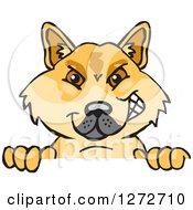 Clipart Of A Dingo Peeking Over A Sign Royalty Free Vector Illustration
