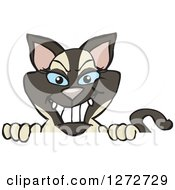 Clipart Of A Happy Siamese Cat Peeking Over A Sign Royalty Free Vector Illustration