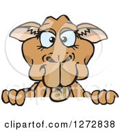 Clipart Of A Blue Eyed Camel Peeking Over A Sign Royalty Free Vector Illustration by Dennis Holmes Designs