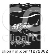 Clipart Of Black And White Woodcut Prehistoric Dunkleosteus And Coelacanth Fish Royalty Free Vector Illustration