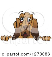 Clipart Of A Happy Blood Hound Dog Peeking Over A Sign Royalty Free Vector Illustration