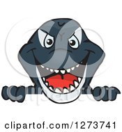 Clipart Of A Killer Orca Whale Peeking Over A Sign Royalty Free Vector Illustration