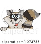 Clipart Of A Happy Raccoon Peeking Over A Sign Royalty Free Vector Illustration by Dennis Holmes Designs