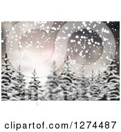 Blurred Christmas Background Of Snow And Evergreen Trees