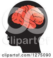 Silhouetted Human Head And Red Brain