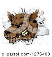 Clipart Of A Ferocious Brown Wolf Breaking Through A Wall Royalty Free Vector Illustration by AtStockIllustration