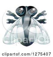 Cute House Fly Bug