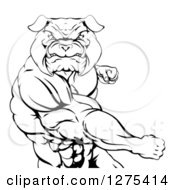 Black And White Angry Muscular Bulldog Man Punching