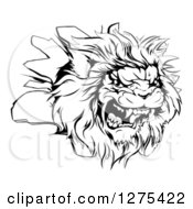 Black And White Roaring Angry Lion Head Breaking Through A Wall