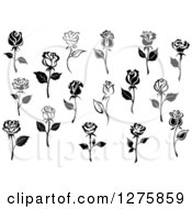 Clipart Of Black And White Rose Flowers 5 Royalty Free Vector Illustration