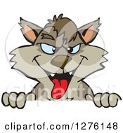 Clipart Of A Grinning Wolf Peeking Over A Sign Royalty Free Vector Illustration