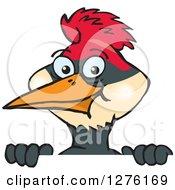 Happy Woodpecker Peeking Over A Sign