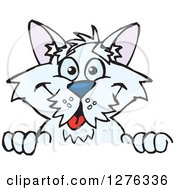Clipart Of A White Terrier Dog Peeking Over A Sign Royalty Free Vector Illustration