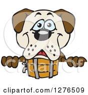Happy St Bernard Dog Peeking Over A Sign