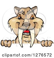 Clipart Of A Saber Toothed Tiger Peeking Over A Sign Royalty Free Vector Illustration