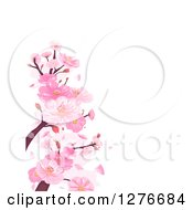 Clipart Of A Background Of Pink Cherry Blossoms And Branches Over White Royalty Free Vector Illustration by BNP Design Studio