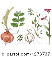 Clipart Of Herbal Plants And Roots Royalty Free Vector Illustration by BNP Design Studio