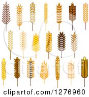 Clipart Of Wheat Stalks 2 Royalty Free Vector Illustration